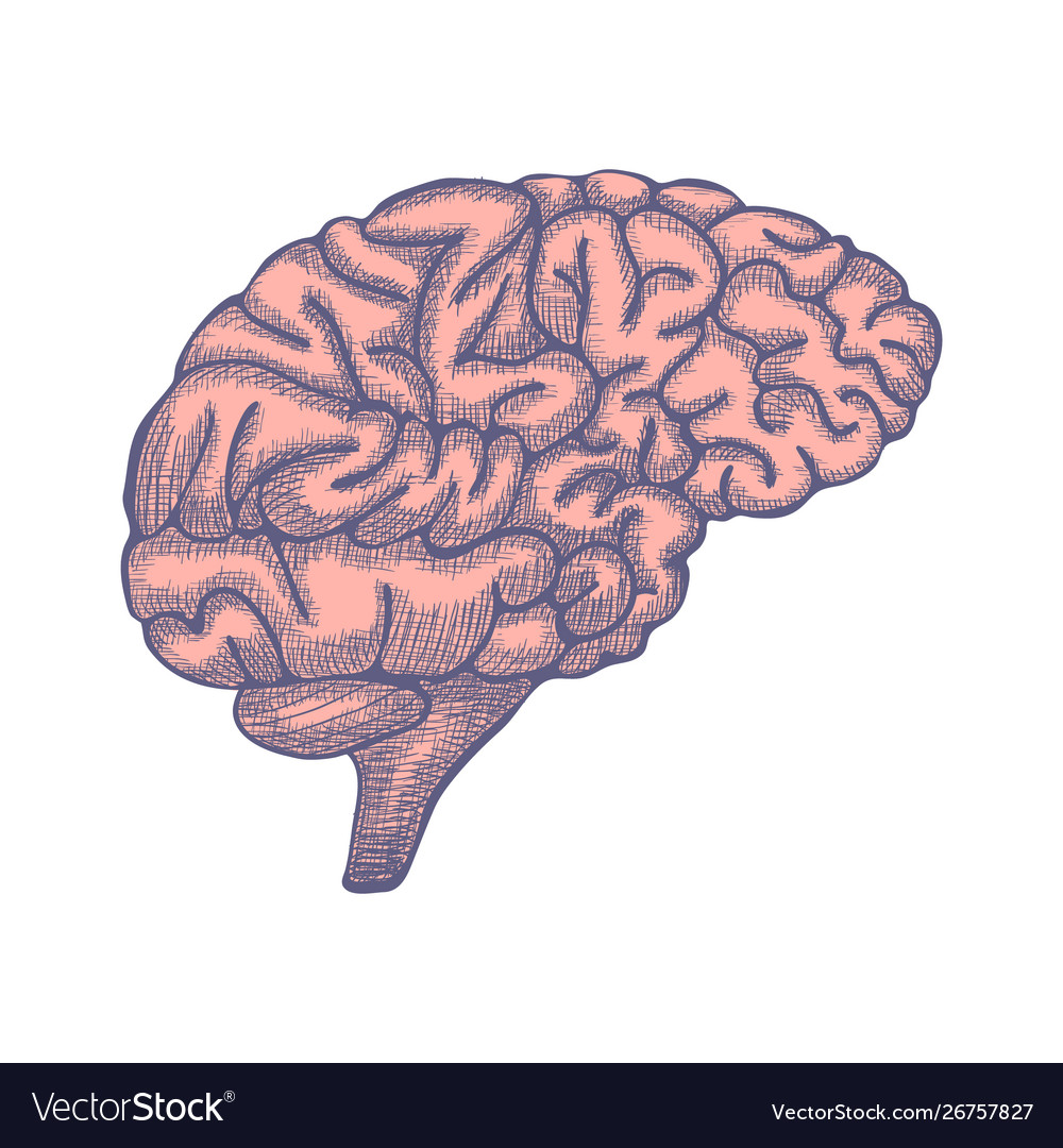 Engraving brain hand drawn