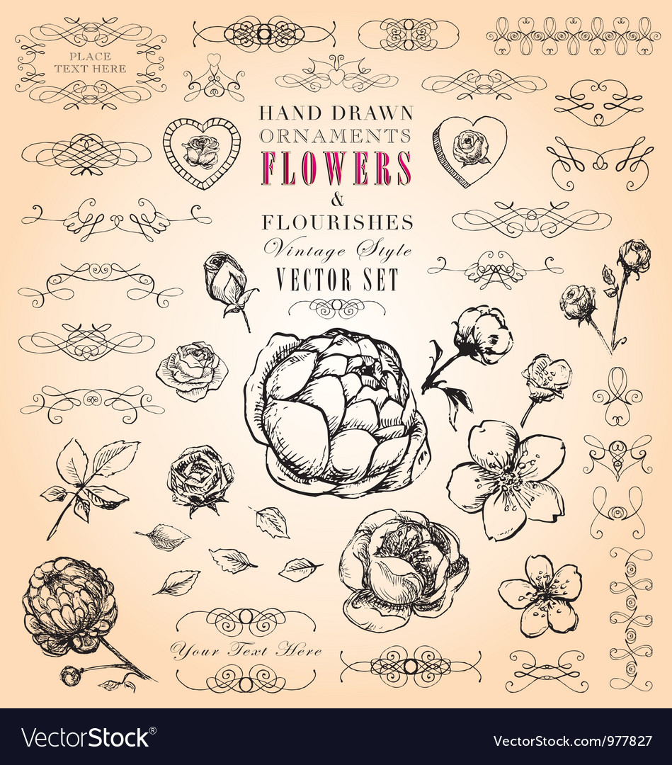 Flowers and Flourishes hand-drawn set vector image
