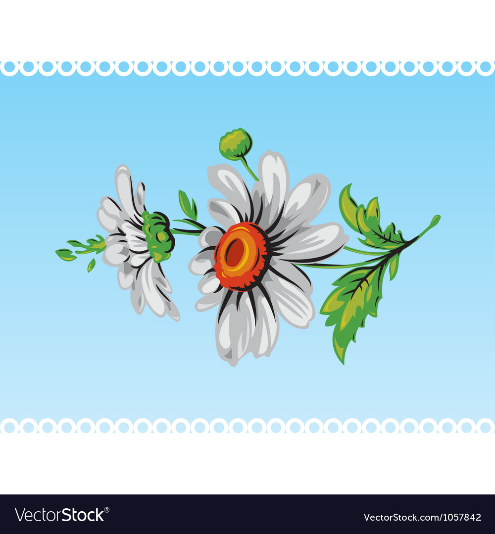 Daisy Flower Background Royalty Free Vector Image