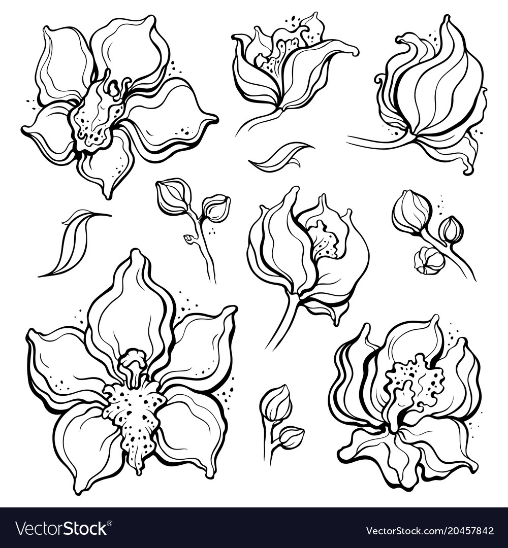 Floral pattern with orchids hand drawn