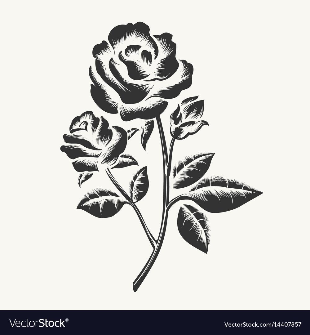 Black hand drawn roses engraving
