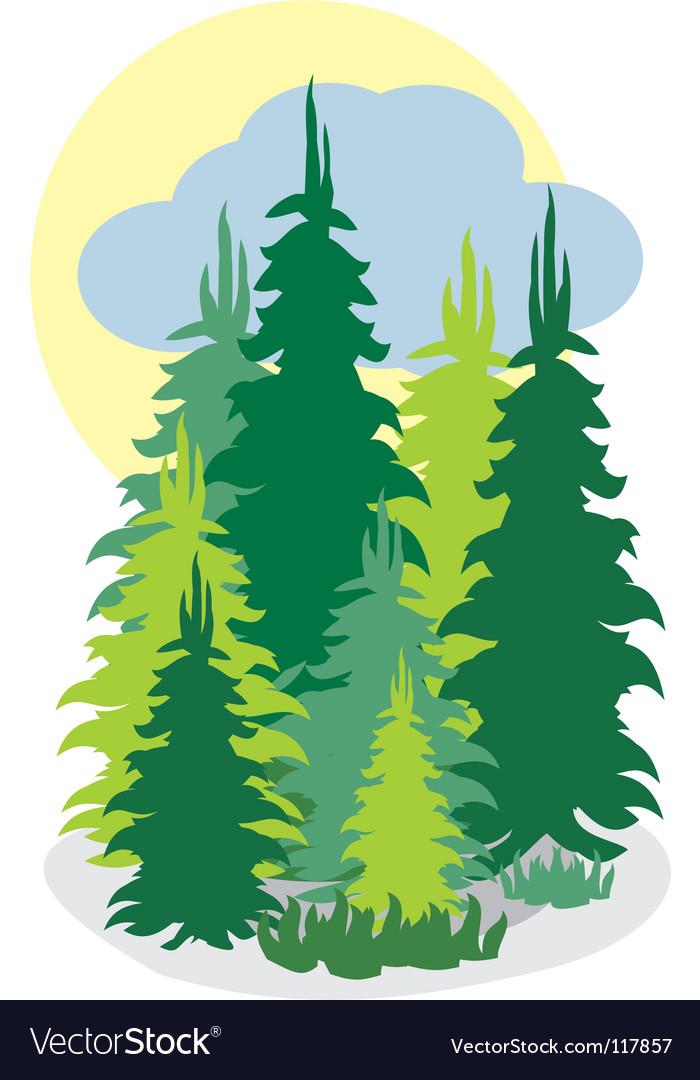 Forrest wood vector image