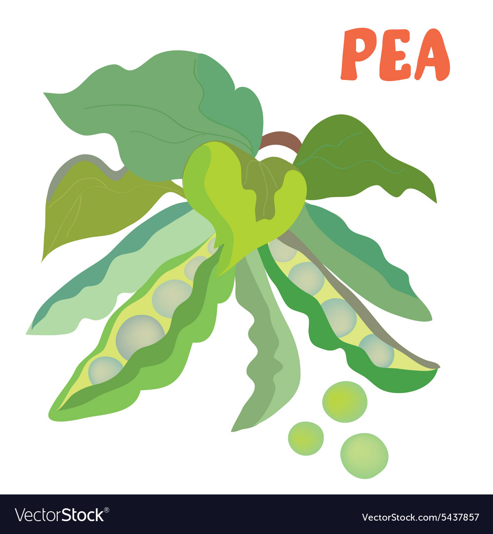 Green pea with beans