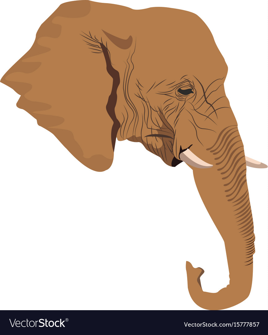Head elephant wild animal safari african