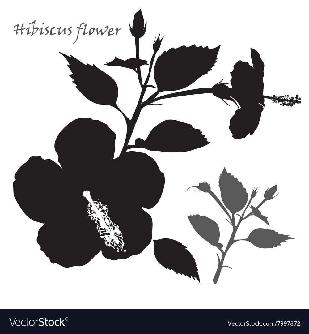 Hibiscus flower black silhouette on white vector image izmirmasajfo