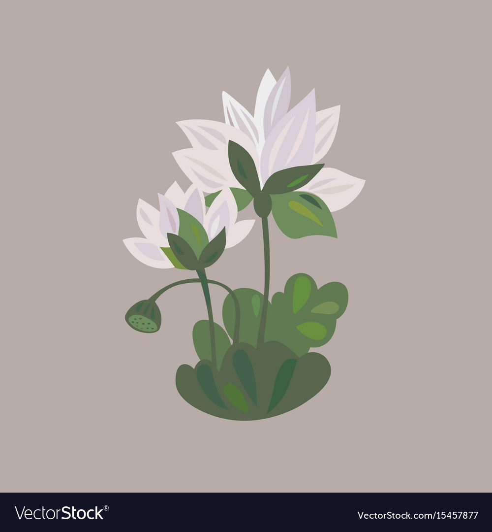 Lotus Flower Icon Water Lily Flower Royalty Free Vector