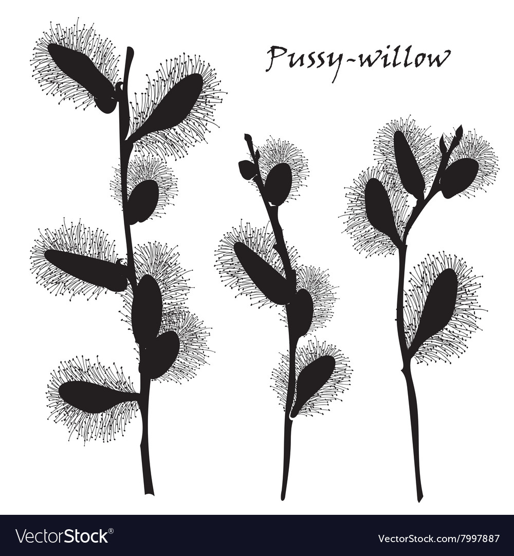 Abstract texture with pussy willow Seamless vector image