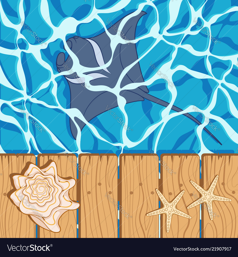 Marine background with manta starfish seashell