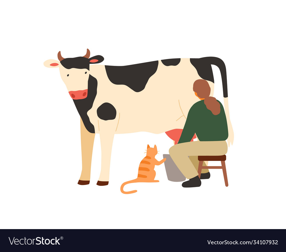 Woman farmer sitting on chair and milking cow