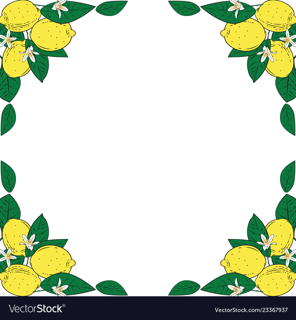 Tropical citrus lemon fruits with flowers frame