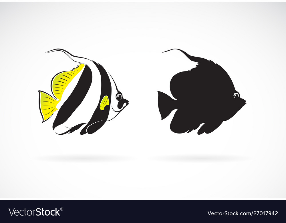 Schooling bannerfish heniochus diphreutes on vector