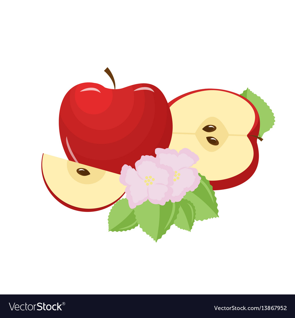 Sweet apple with slice and flower isolated on vector image