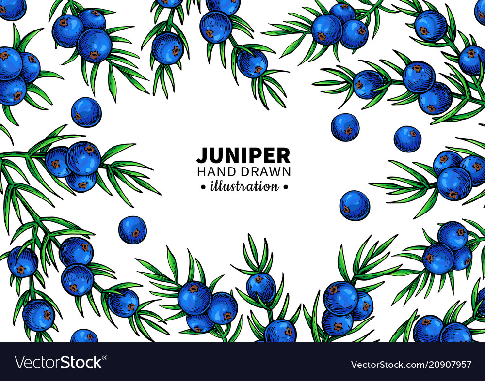 Juniper drawing frame isolated template