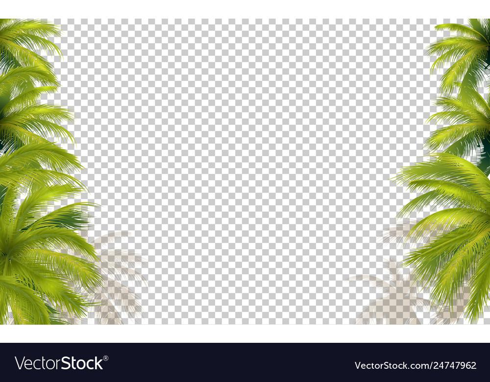 Palms transparent background
