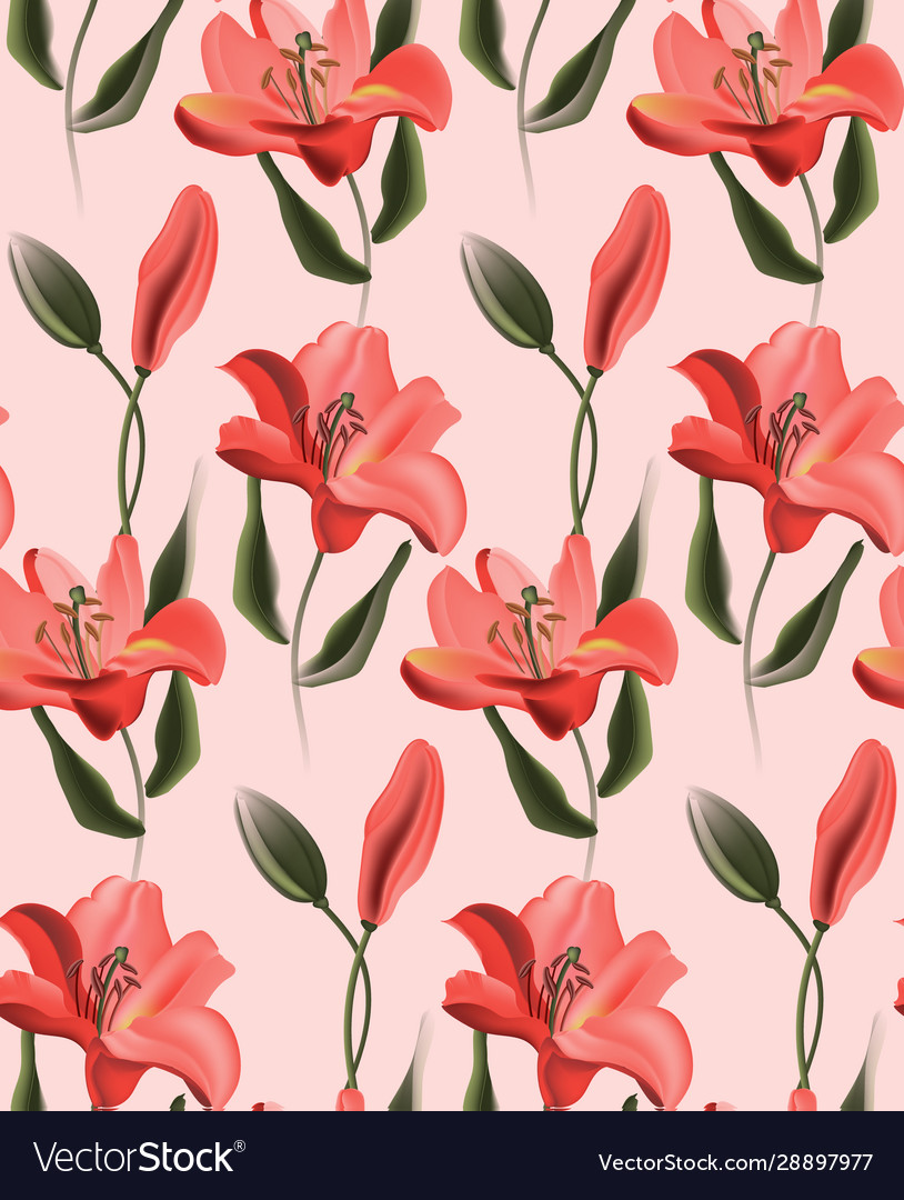 Coral lily red calla or contrast tulip flowers on