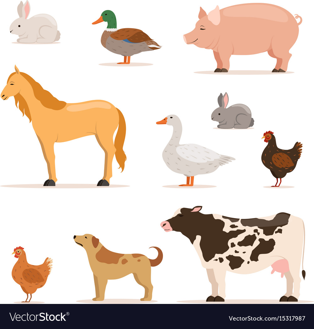 Different domestic animals on farm geese ducks