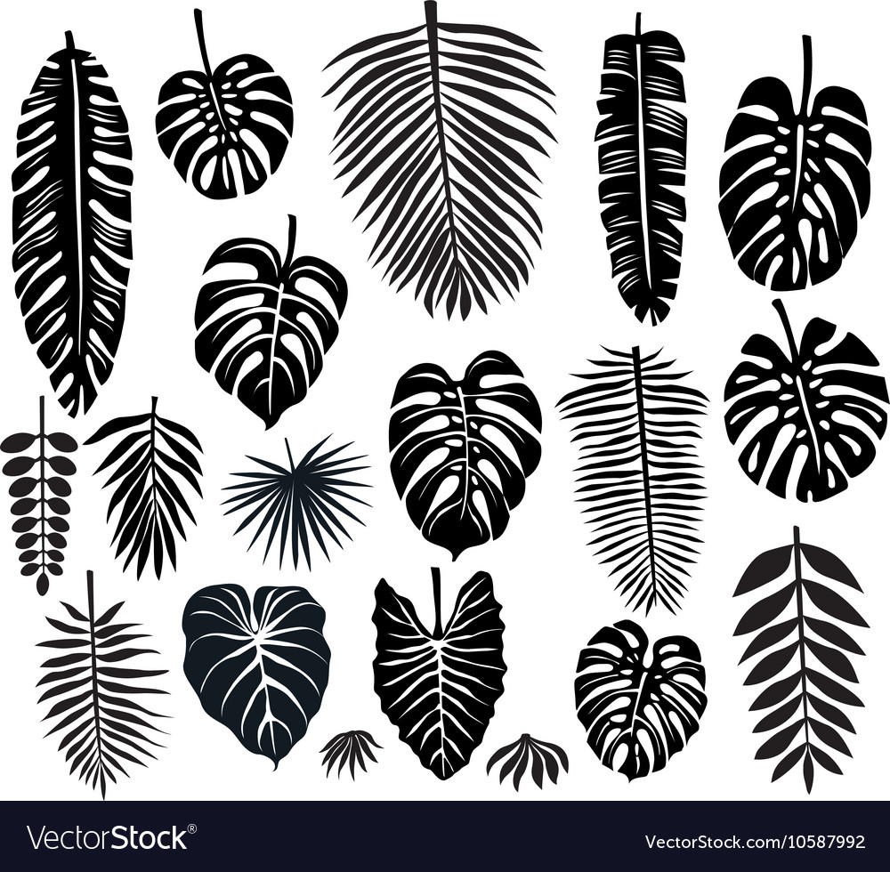 Set Tropical Leaves Royalty Free Vector Image Vectorstock Any other artwork or logos are property and trademarks of their respective owners. vectorstock