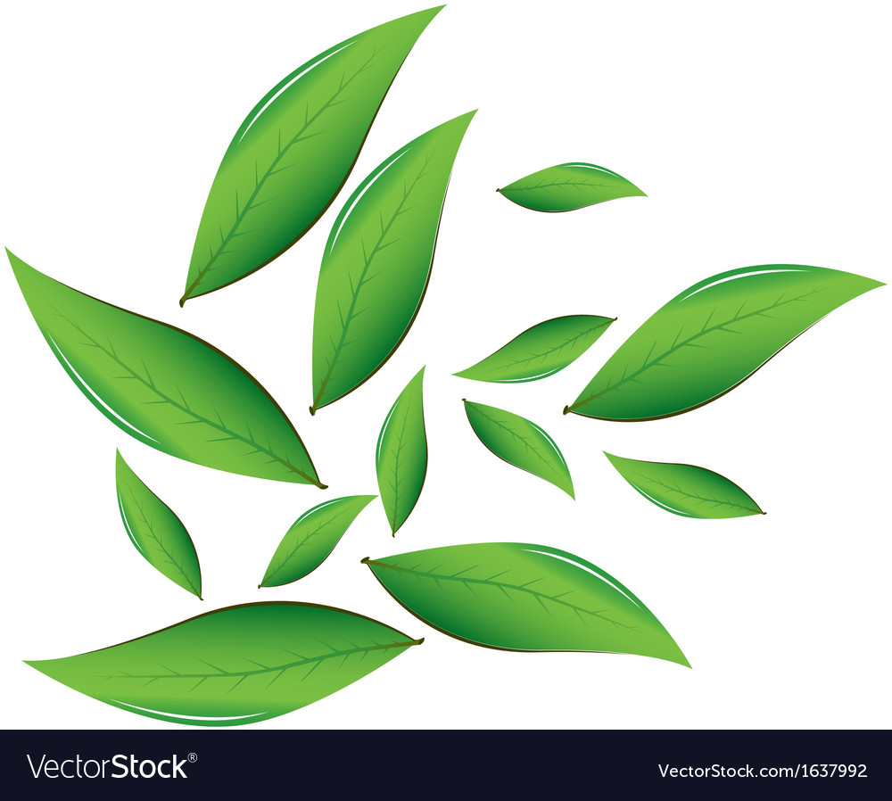 tea leaves royalty free vector image vectorstock rh vectorstock com leaves vector pattern leaves vector free download
