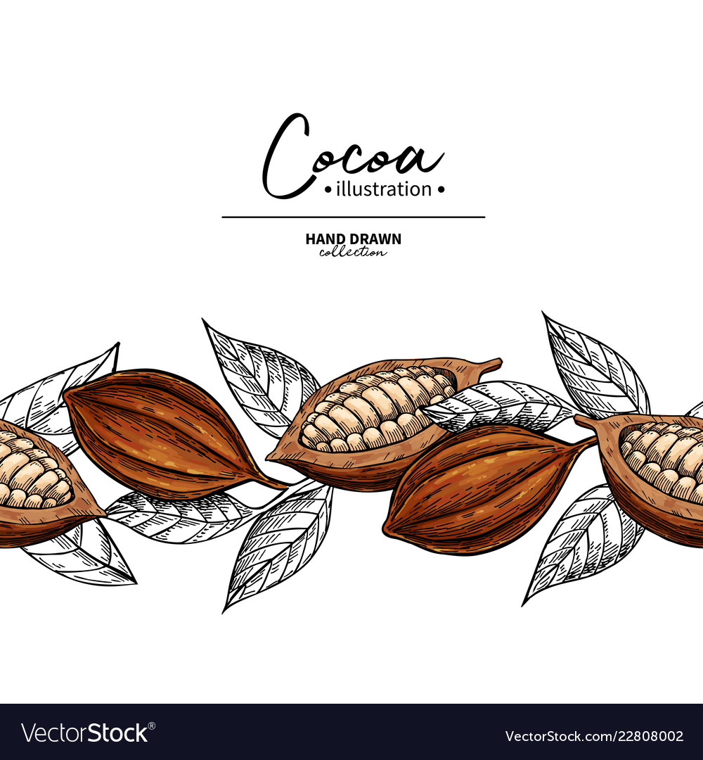 Cocoa border superfood drawing template
