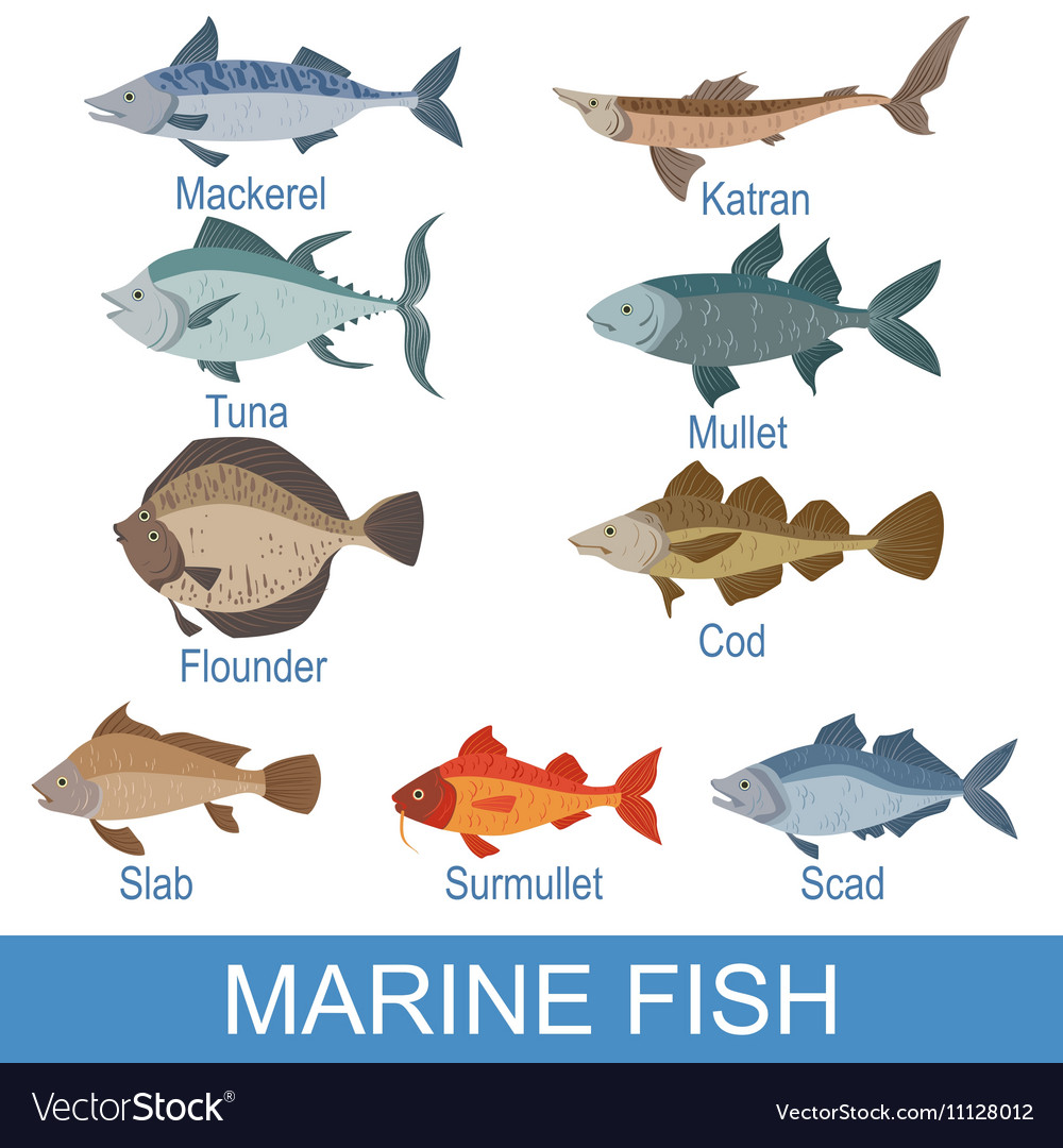 Marine Fish Identification Slate With Names Vector Image