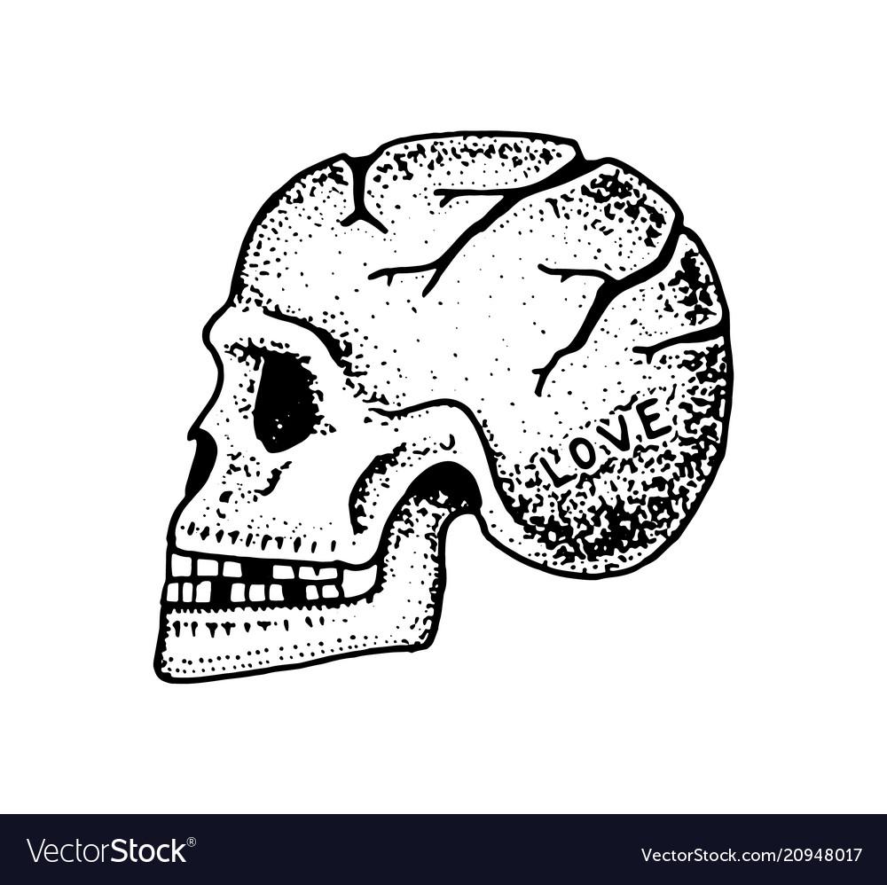 Anatomical human skull skeleton of the head