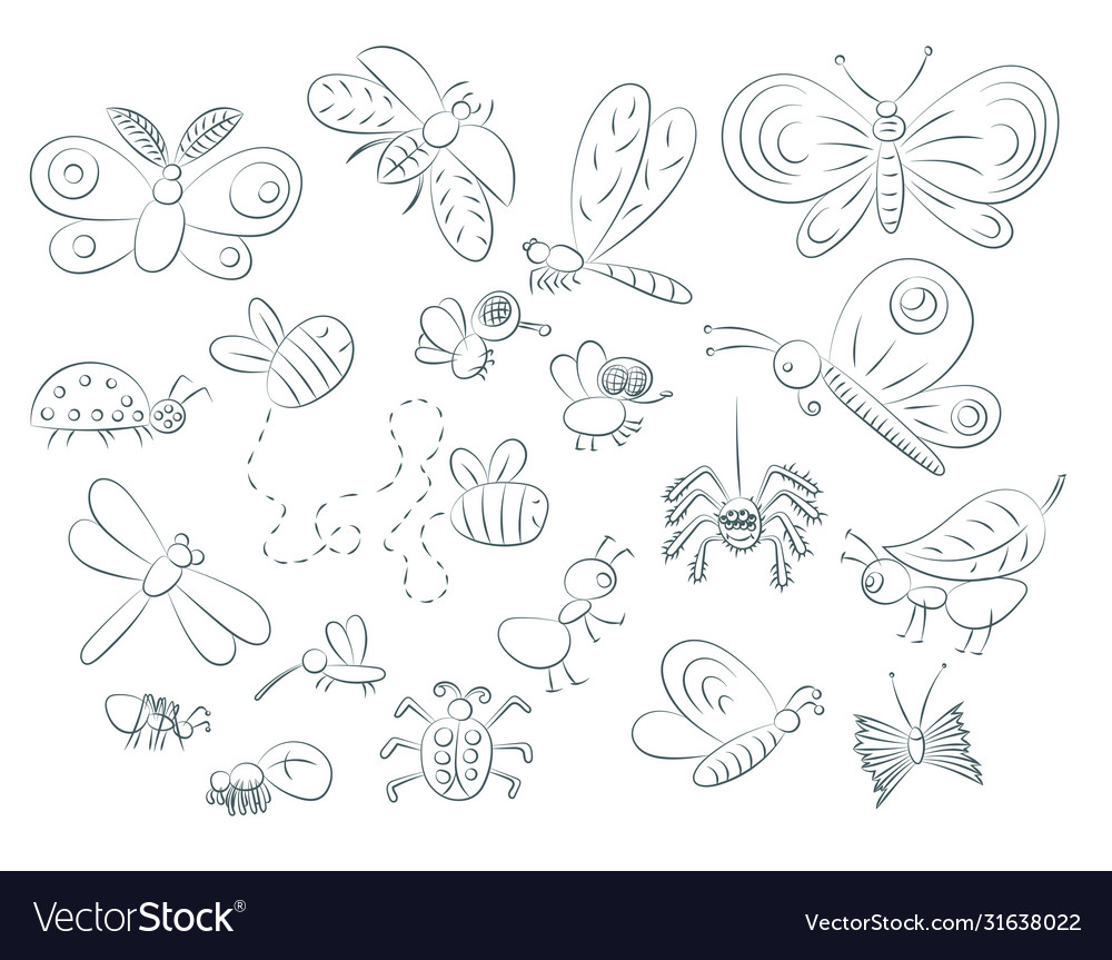 Hand drawn insects