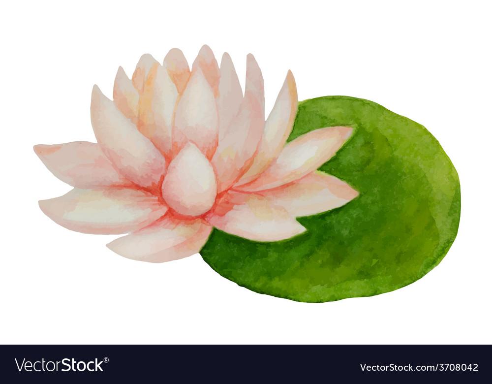 Watercolor pink lotus flower royalty free vector image watercolor pink lotus flower vector image mightylinksfo
