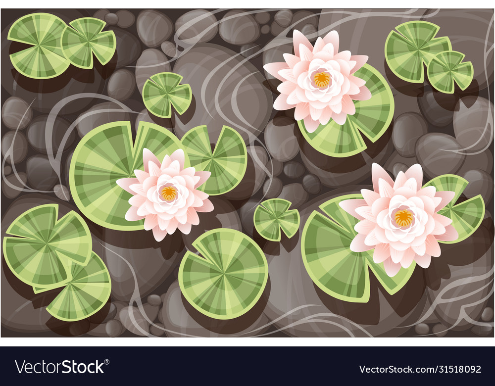 Beautiful lily lotus with green leaves