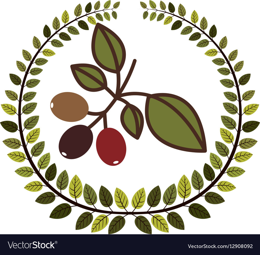 Crown of leaves with coffee tree branch vector image