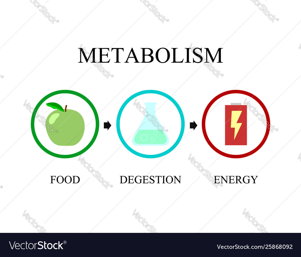 Aveți nevoie de diete eficiente pentru a fi un bun marketer