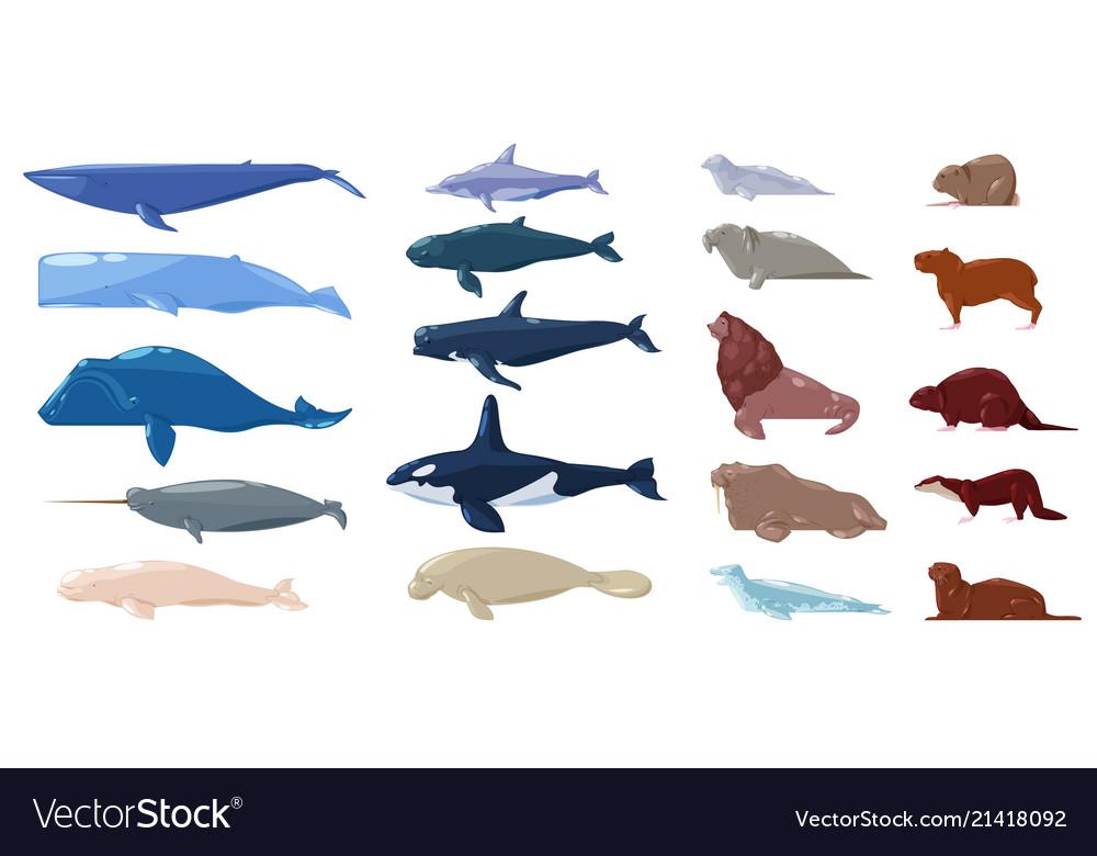 Sea mammal water animal character dolphin