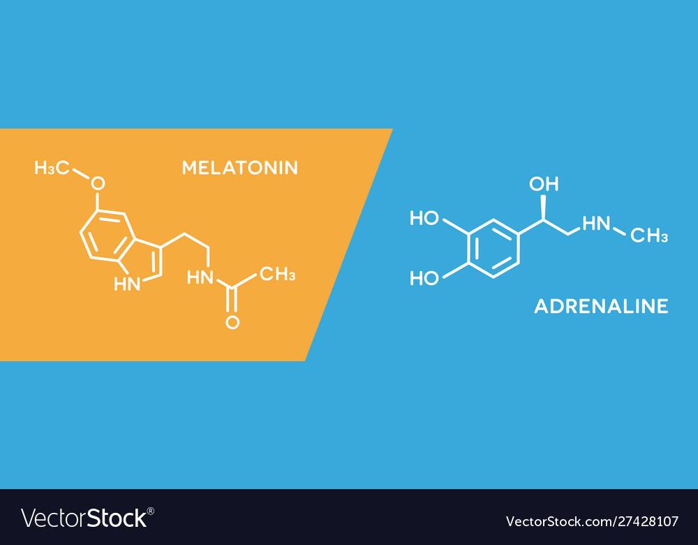 Melatonin and adrenaline hormone symbols human