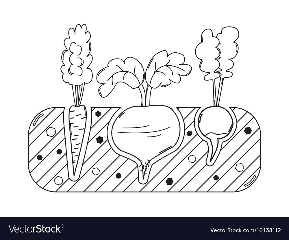 Thin line gardening bed with vegetables