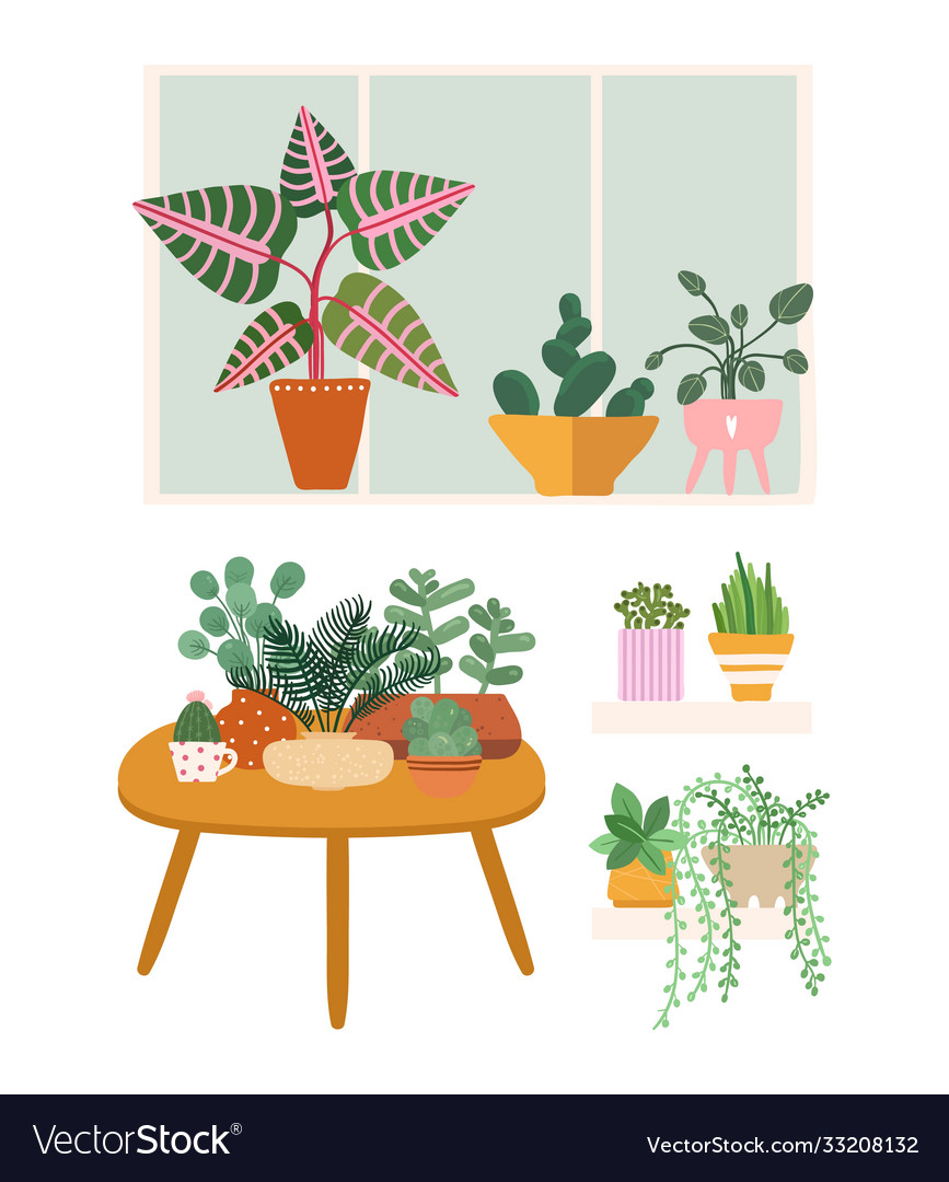Plants at home garden flower pots greens stand