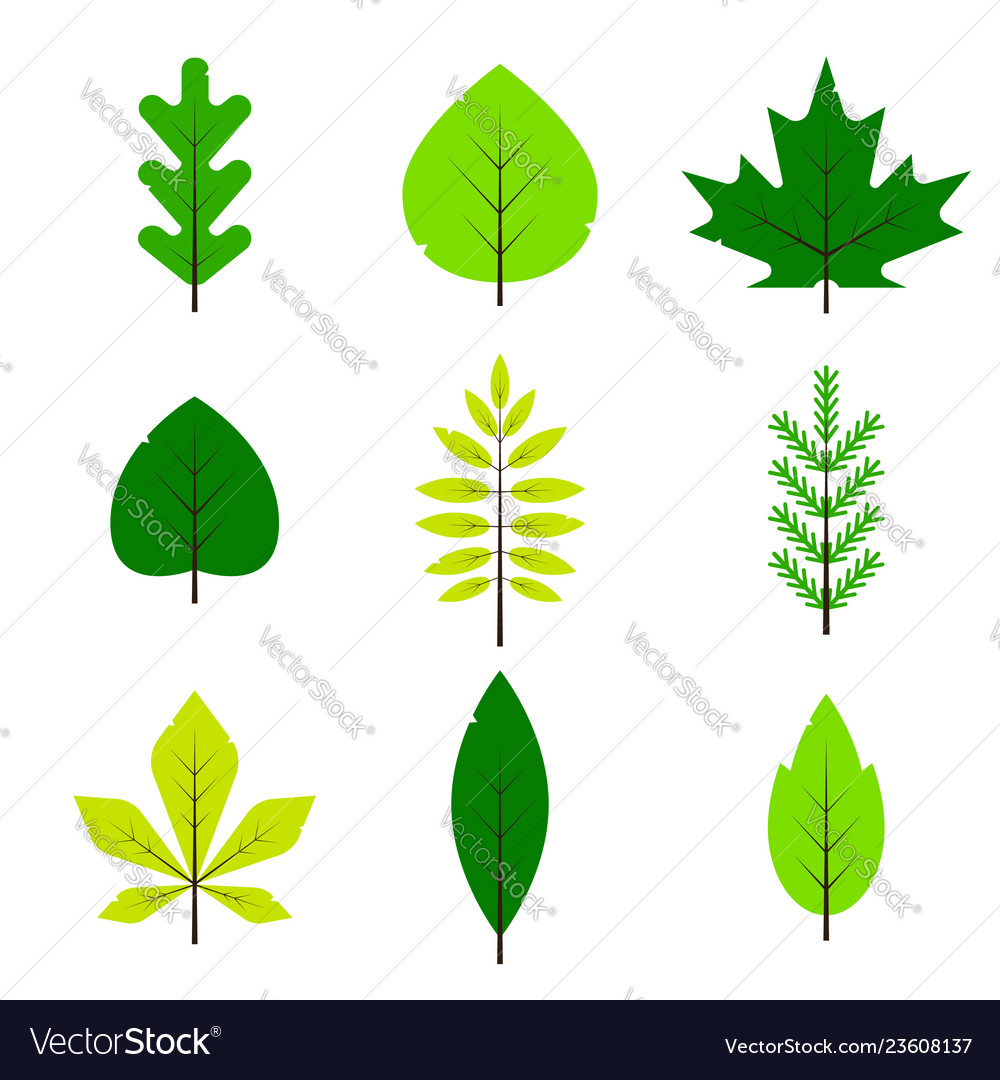 Different green leaves set in flat style isolated