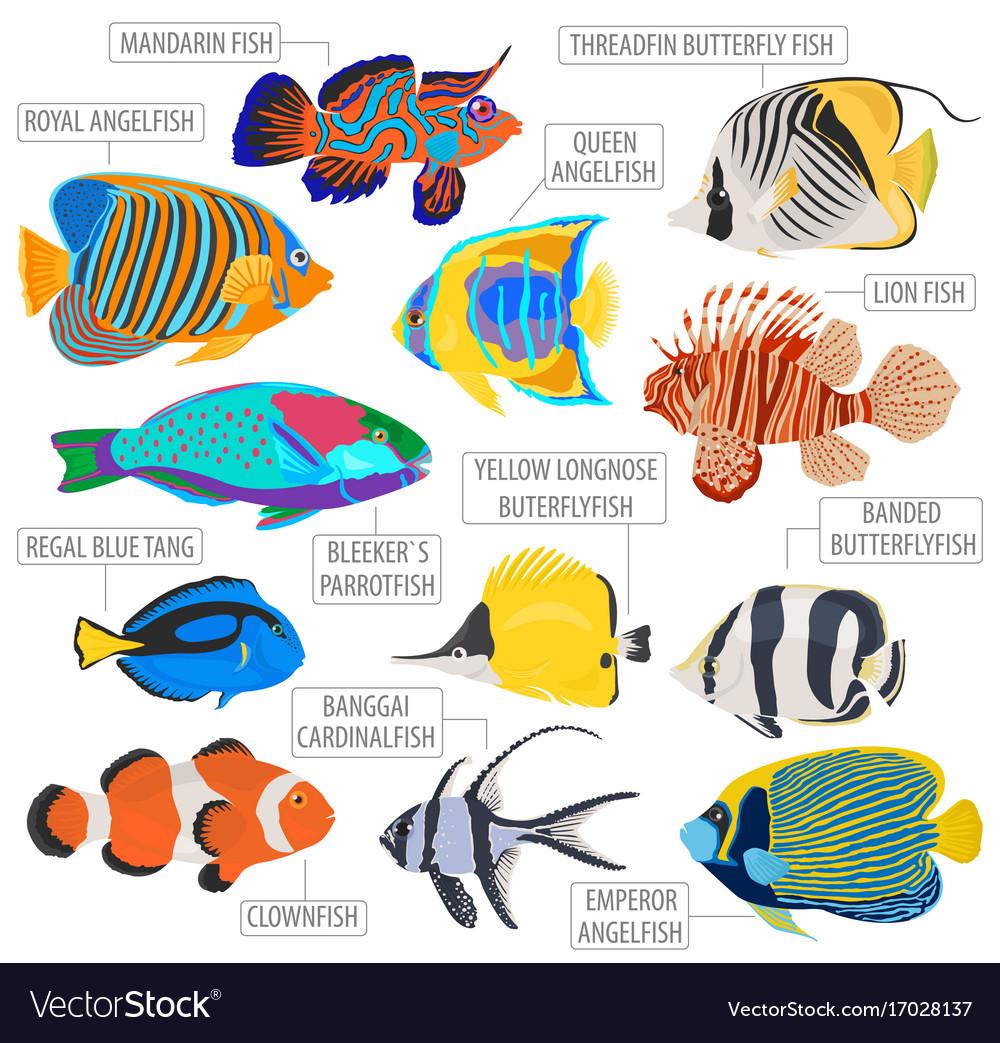 Freshwater Aquarium Fish Breeds Icon
