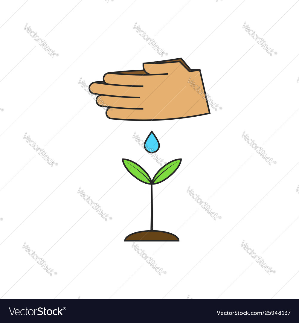 Human hands watering a young plant on theme