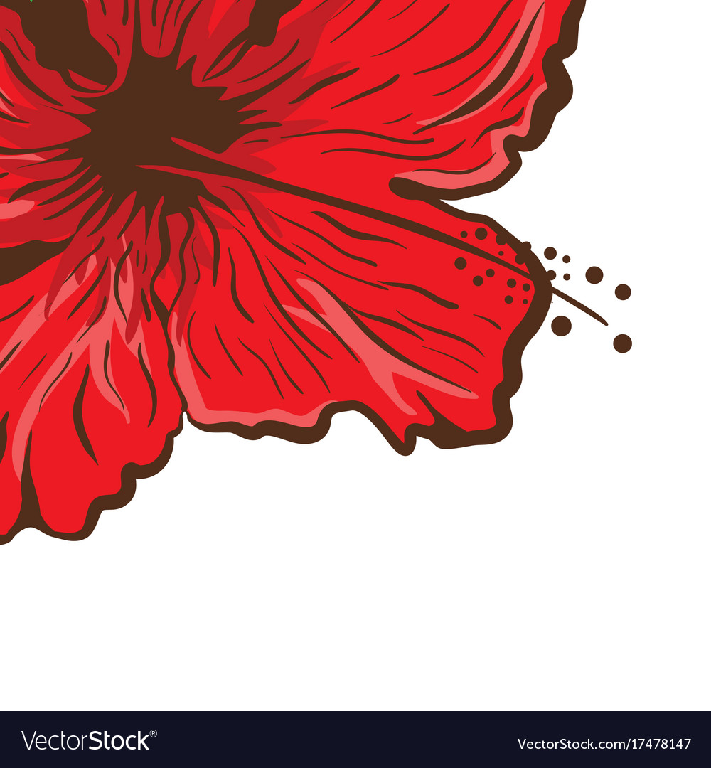 Greeting Card Hibiscus Flower In Tattoo Style Vector Image