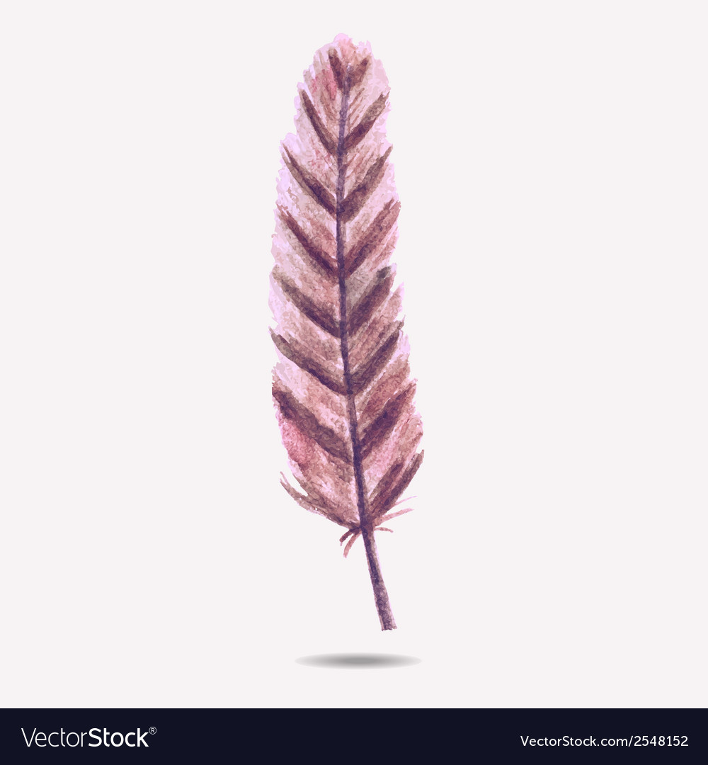 With watercolor feather vector image