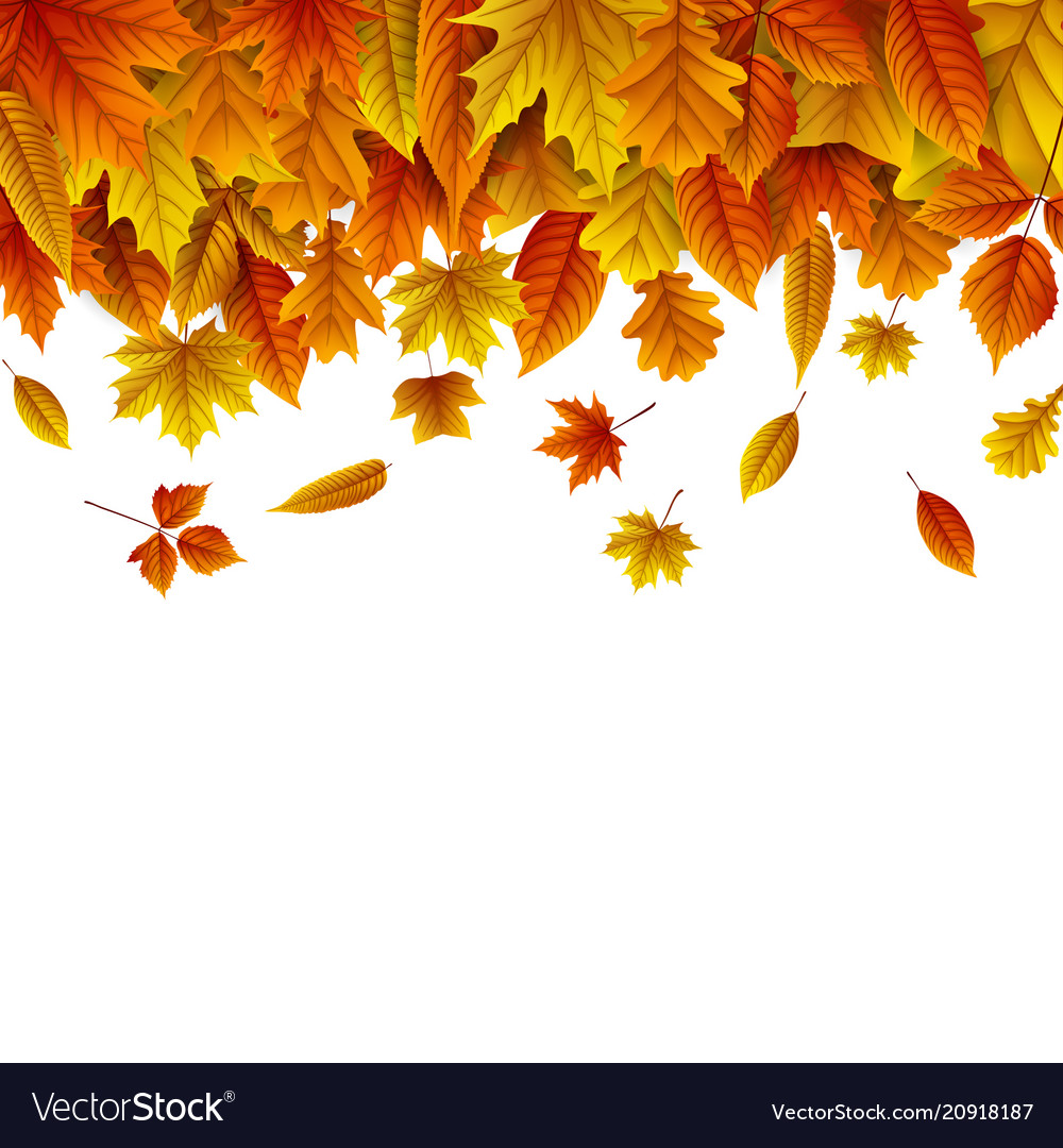 Autumn leaves falling white background