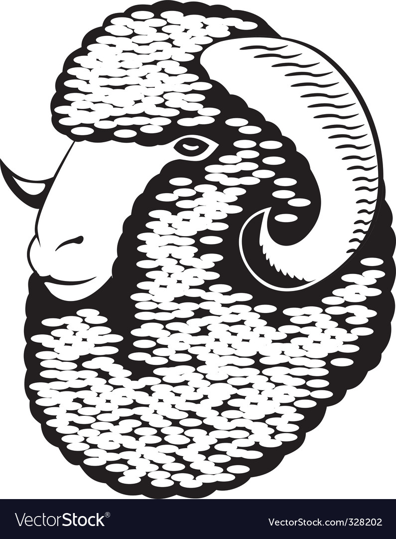 Portrait of a merino sheep