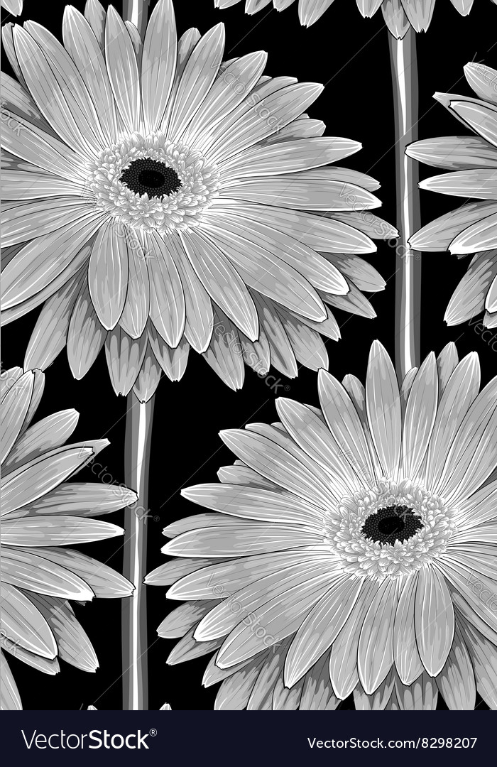 Black and white seamless background with gerbera vector image