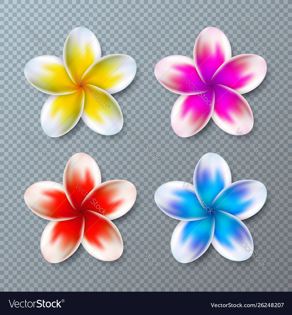 With colorful plumeria flower