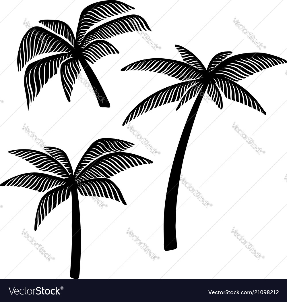 Set of hand drawn palm tree design element for