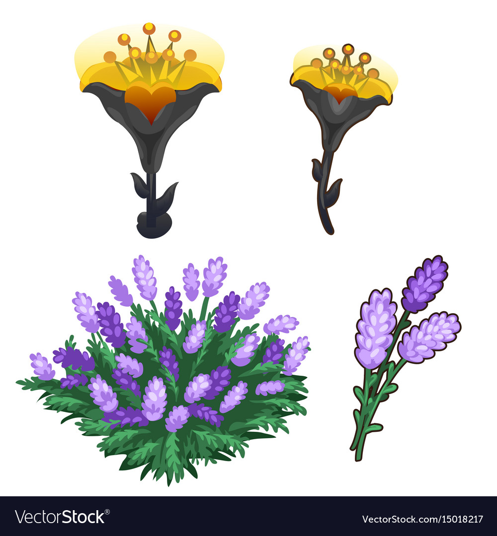 Two bouquets of flowers purple and shining yellow vector image izmirmasajfo