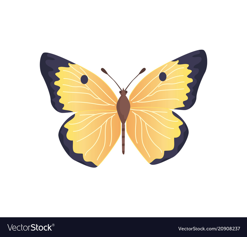 Butterfly yellow color vector