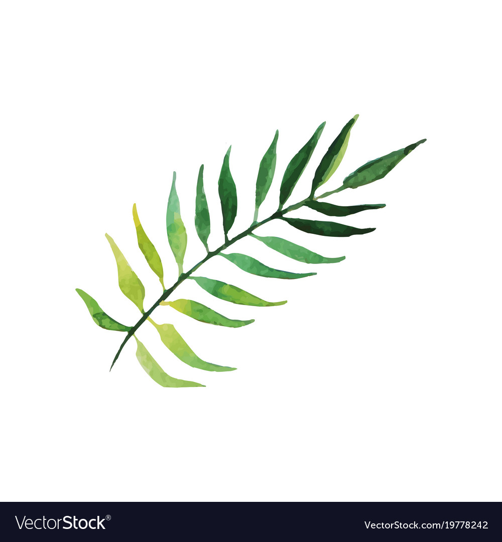 green tree of tropical leaf hand drawn watercolor vector image