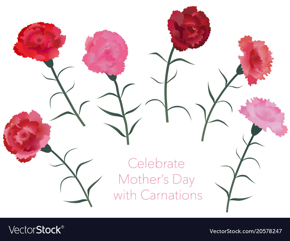 fae04fcd0e7b Set of assorted carnations Royalty Free Vector Image