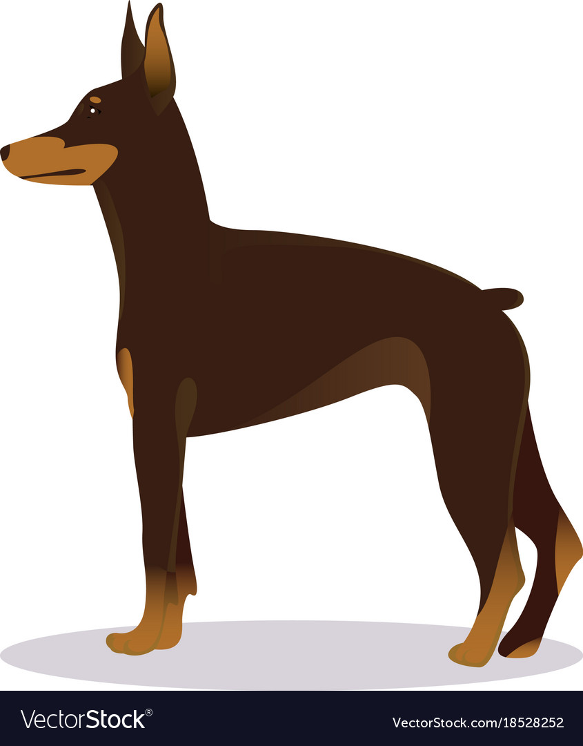 Doberman Pinscher Dog Brown Royalty Free Vector Image