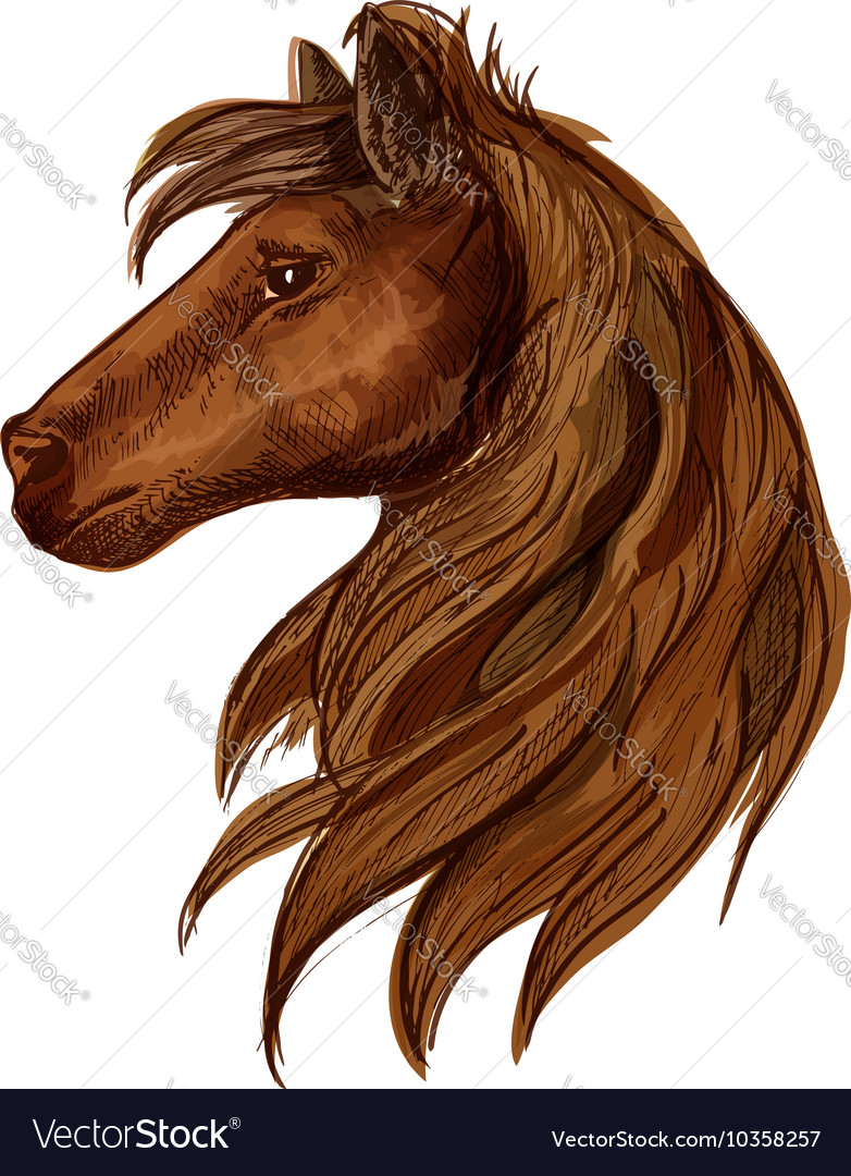 Brown horse head sketch portrait